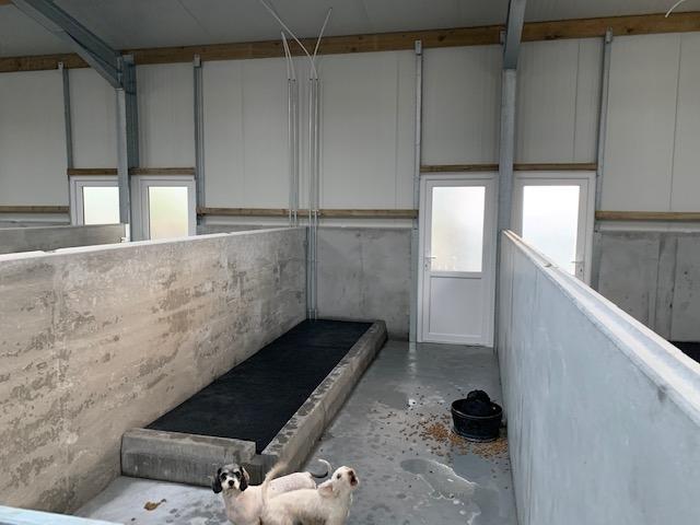 dog kennel bay